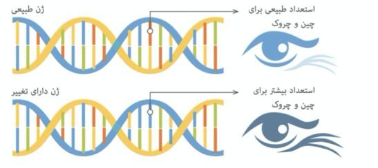 چروک-کلاژن-زیبایی-و-تست-ژنتیکی-پوست-مای-ژن.jpg